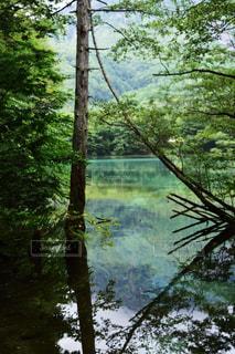 上高地の写真・画像素材[1244244]