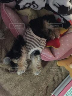 犬の写真・画像素材[472937]