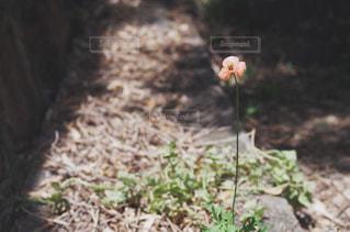 自然 - No.473080