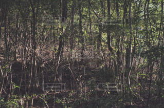 自然 - No.473093