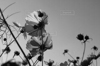 花の写真・画像素材[478783]