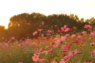 秋の夕景の写真・画像素材[800858]