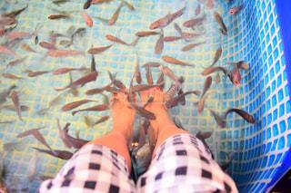 魚の写真・画像素材[481057]