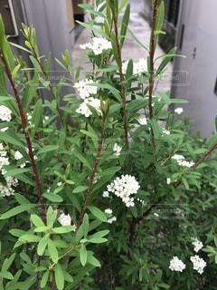 花の写真・画像素材[476582]