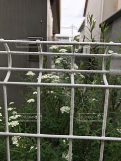 花の写真・画像素材[476586]