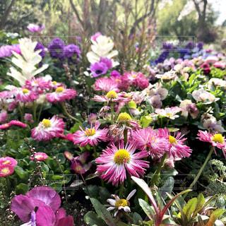 近くに紫の花のアップの写真・画像素材[1101722]