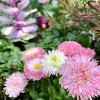 植物にピンクの花の写真・画像素材[1101724]
