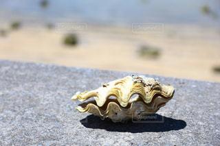 海の写真・画像素材[494761]