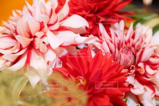 近くの花のアップ - No.874505
