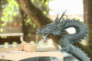 木製のテーブルに爬虫類 - No.874508