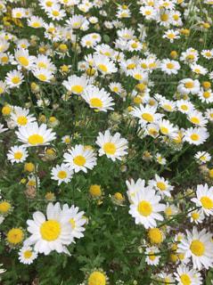 花の写真・画像素材[473862]