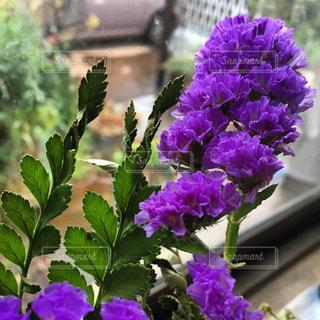 花の写真・画像素材[475459]