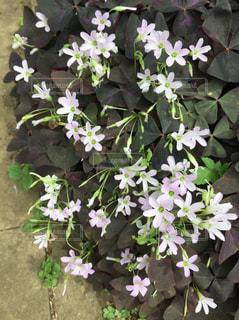 花の写真・画像素材[476063]