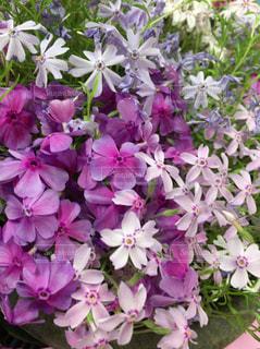 花の写真・画像素材[494165]
