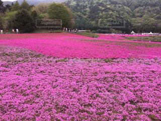 花の写真・画像素材[500404]