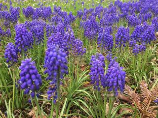 花の写真・画像素材[500405]