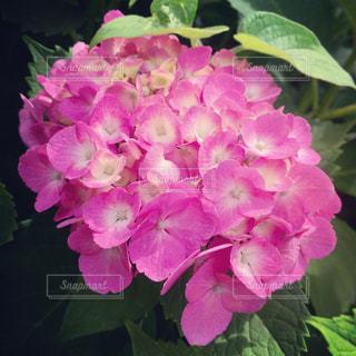 花の写真・画像素材[537969]