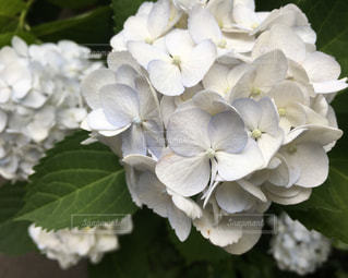 花の写真・画像素材[537970]