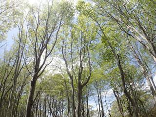 春の写真・画像素材[473892]