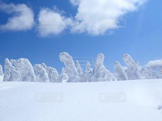 No.474321 雪