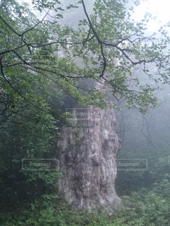 登山の写真・画像素材[474656]