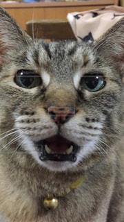 猫の写真・画像素材[136506]