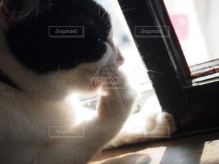 猫 - No.136522