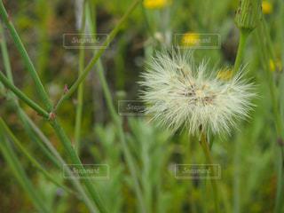自然の写真・画像素材[136525]