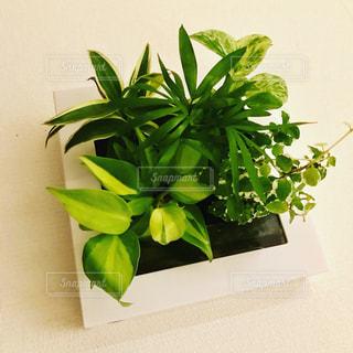 壁掛け植物の写真・画像素材[1006281]