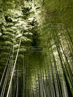 竹林の写真・画像素材[1006302]