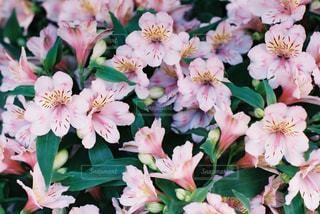 花の写真・画像素材[474767]