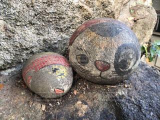 福石猫の写真・画像素材[1642255]