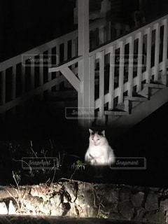 猫 - No.494876