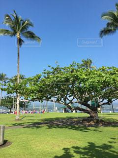 椰子の木の写真・画像素材[512238]
