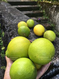 果物の写真・画像素材[518996]