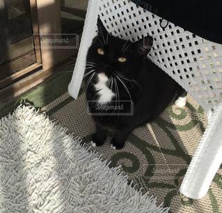 猫の写真・画像素材[519140]