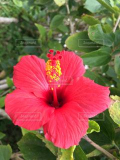花の写真・画像素材[474443]