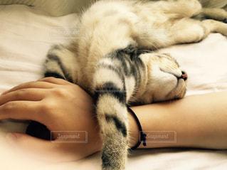 猫の写真・画像素材[474607]
