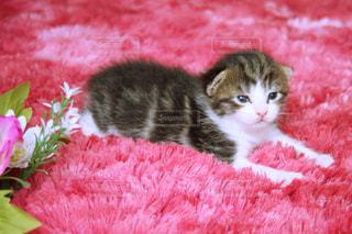猫の写真・画像素材[601155]