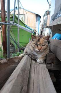 猫の写真・画像素材[474841]