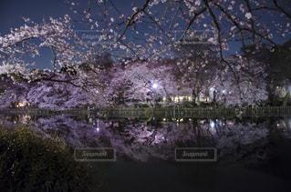 春の写真・画像素材[487345]