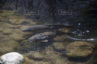 No.502048 魚