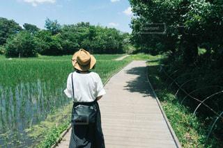 散歩 - No.1257452