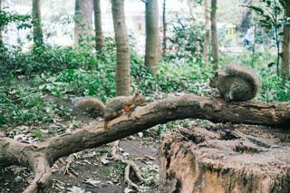 木の枝に座っている猿の写真・画像素材[1554828]