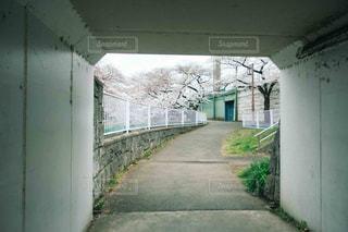 春の写真・画像素材[1953949]