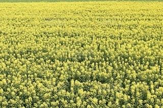 花畑のクローズアップの写真・画像素材[4012118]