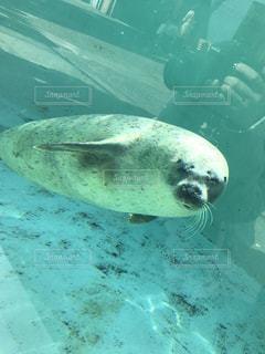 水族館の写真・画像素材[500630]