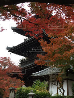 秋の写真・画像素材[556413]