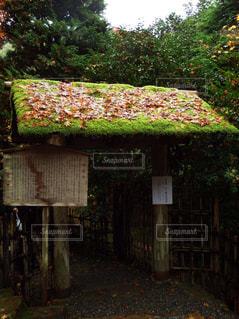 秋の写真・画像素材[556414]