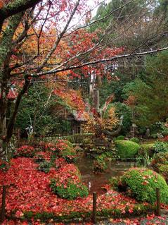 秋の写真・画像素材[556416]